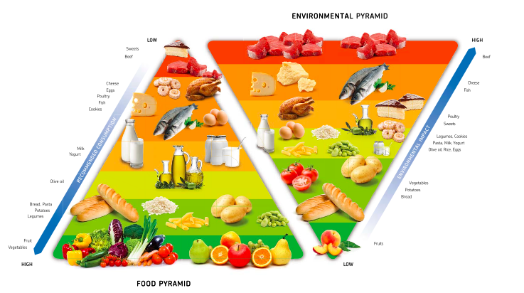 Healthy Food Cycle